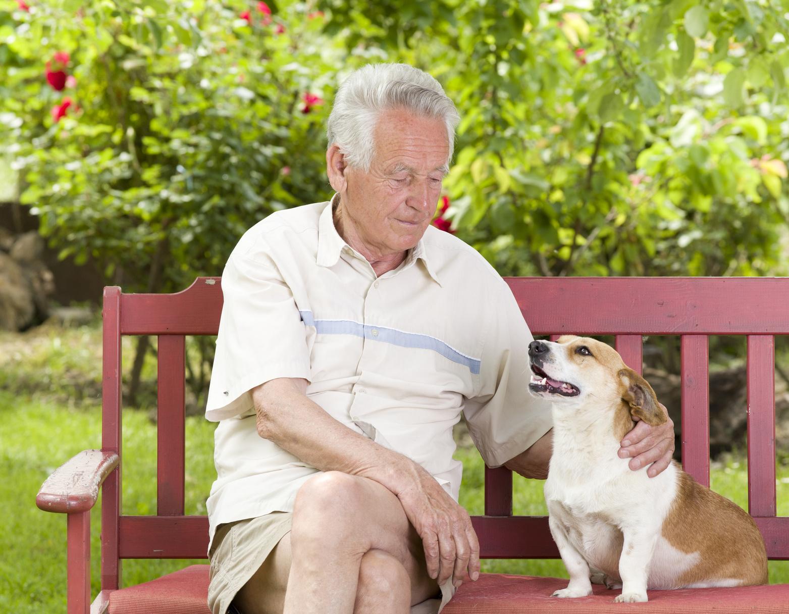 senior-kurze-hose-helles-hemd-rote-parkbank-streichelt-hund